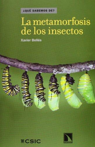 Metamorfosis De Los Insectos, La
