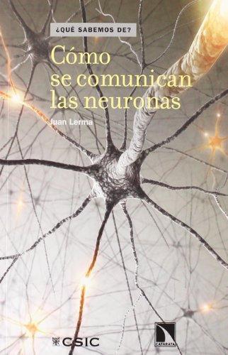Como Se Comunican Las Neuronas